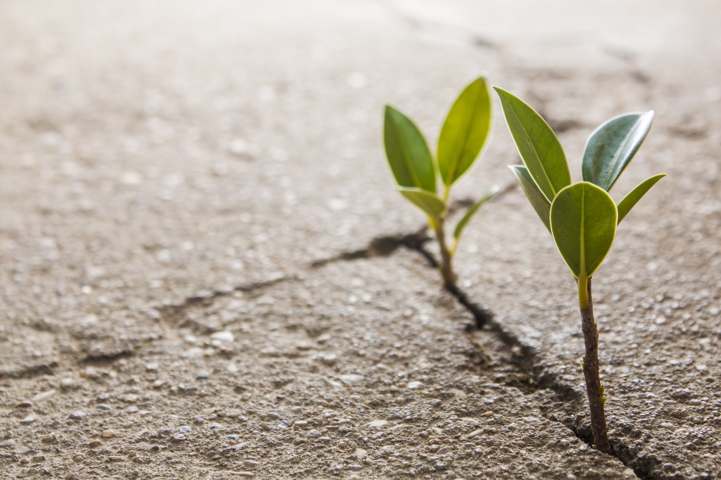 Why Resilience Matters Today More Than Ever