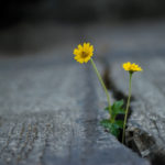 Flowers growing out of stone crack