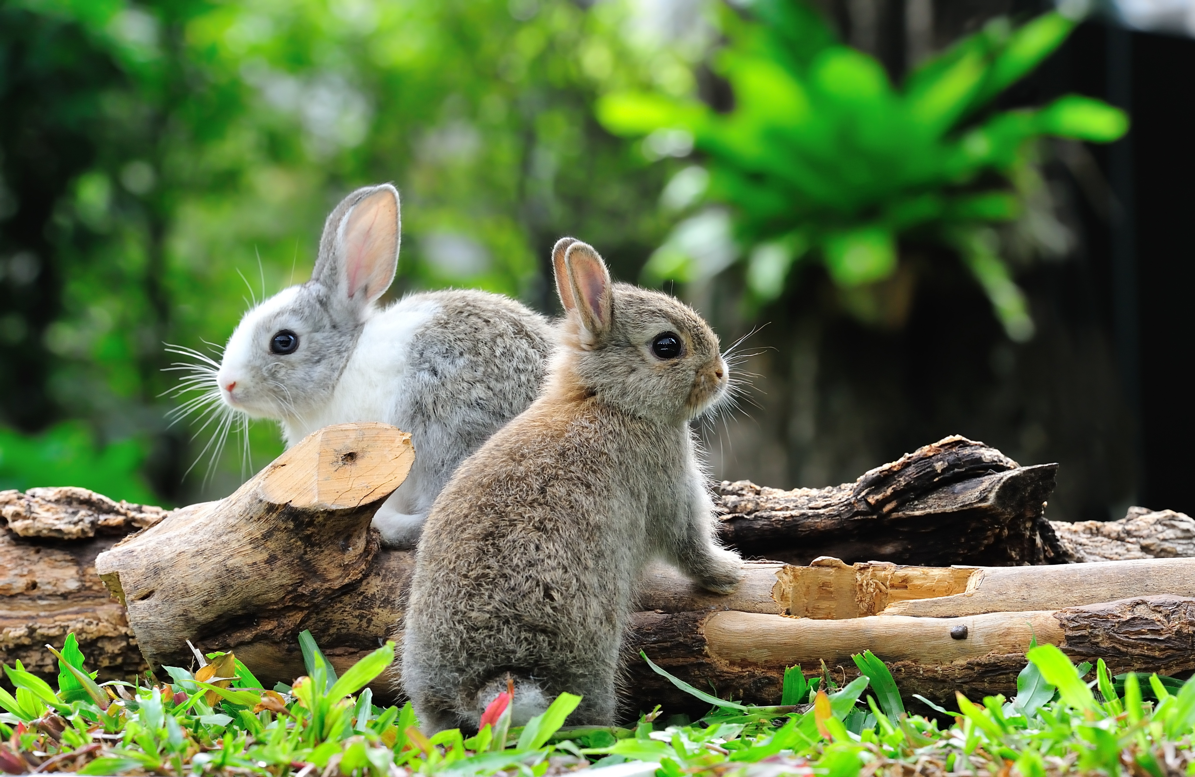two bunny rabbits on a log in the garden